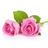 Everything Rose